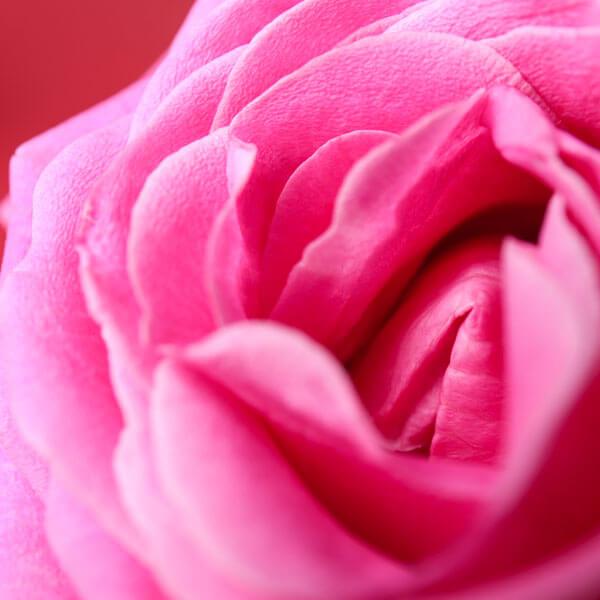 Sexolog Else O blog om Vulvodyni og kroniske smerter i underlivet